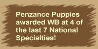 Penzance puppies awarded WB at 3 of the last 4 National Specialties!